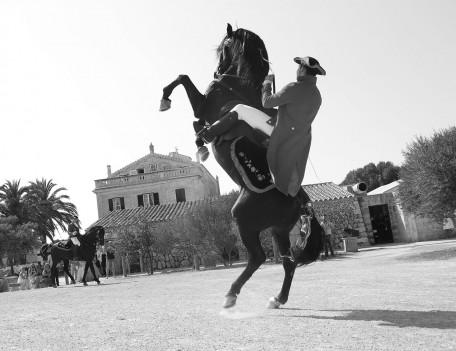 horse rider rears horse - Hotel Alcaufar Vell