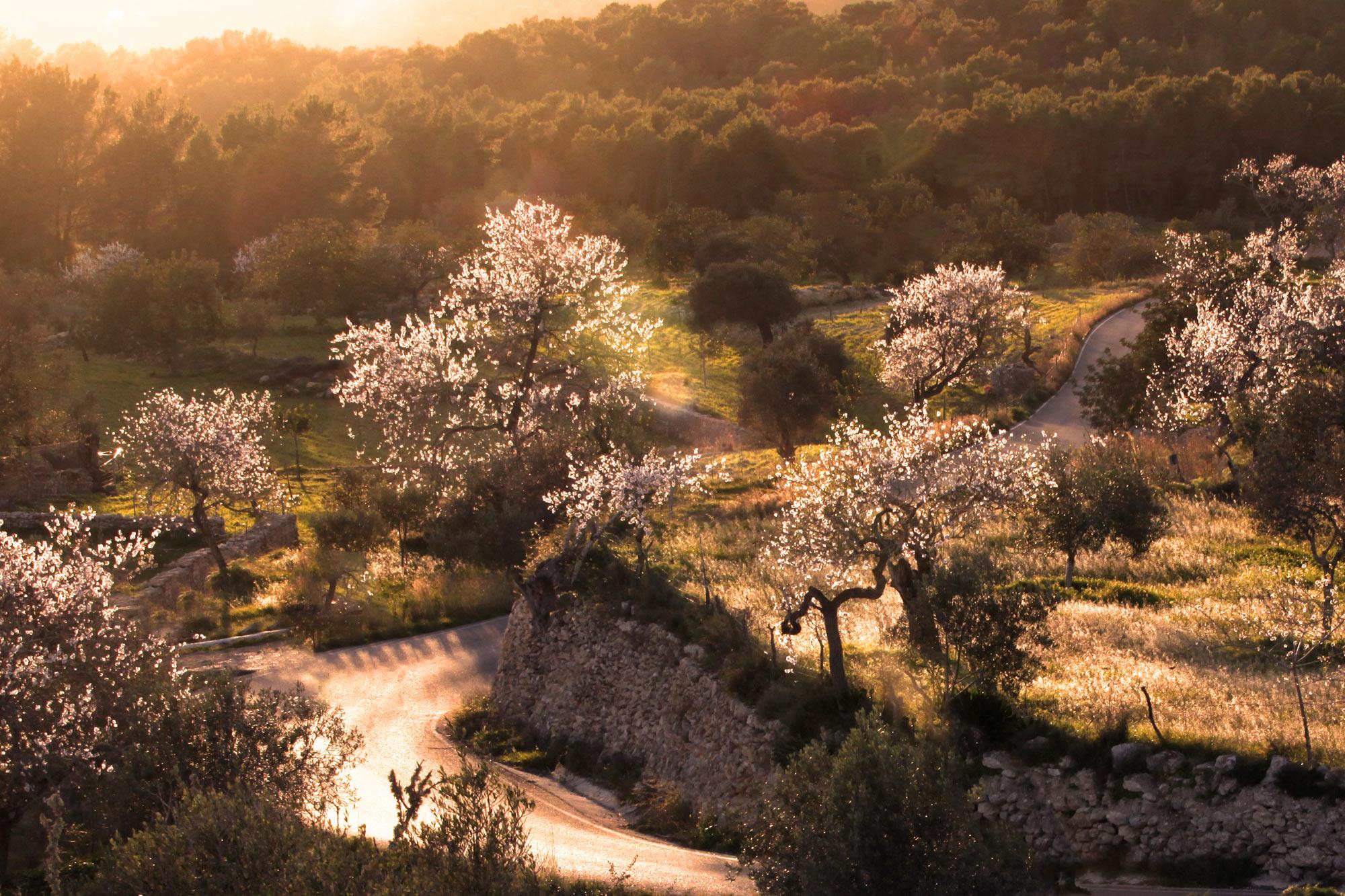 blossom on trees