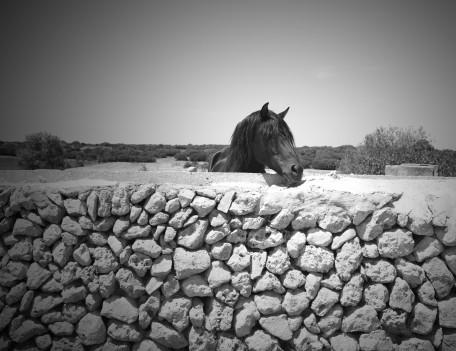 horse's head over wall - Fiesta Horses