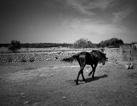 horse in paddock - Fiesta Horses