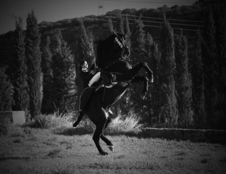 rearing horse in field - Mahon Fiesta