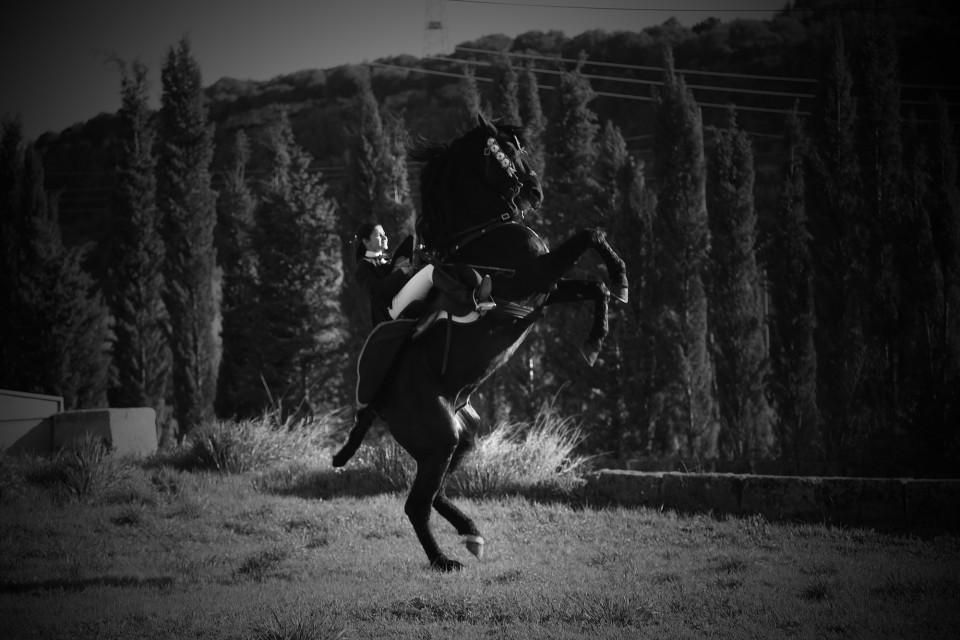 rearing horse in field
