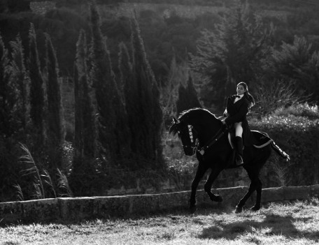 cantering horse with rider - Mahon Fiesta