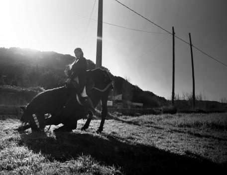 kneeling horse - Mahon Fiesta
