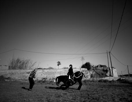 kneeling horse - Fiesta Horses
