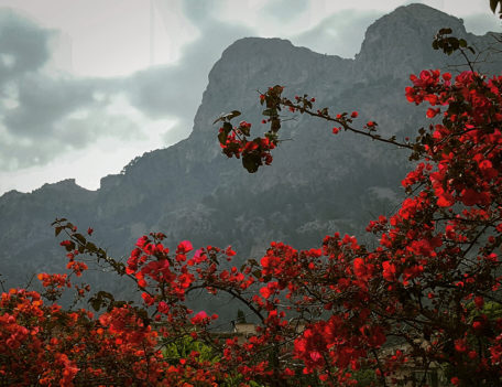 red flowers landscape photography - Mallorca Landscapes