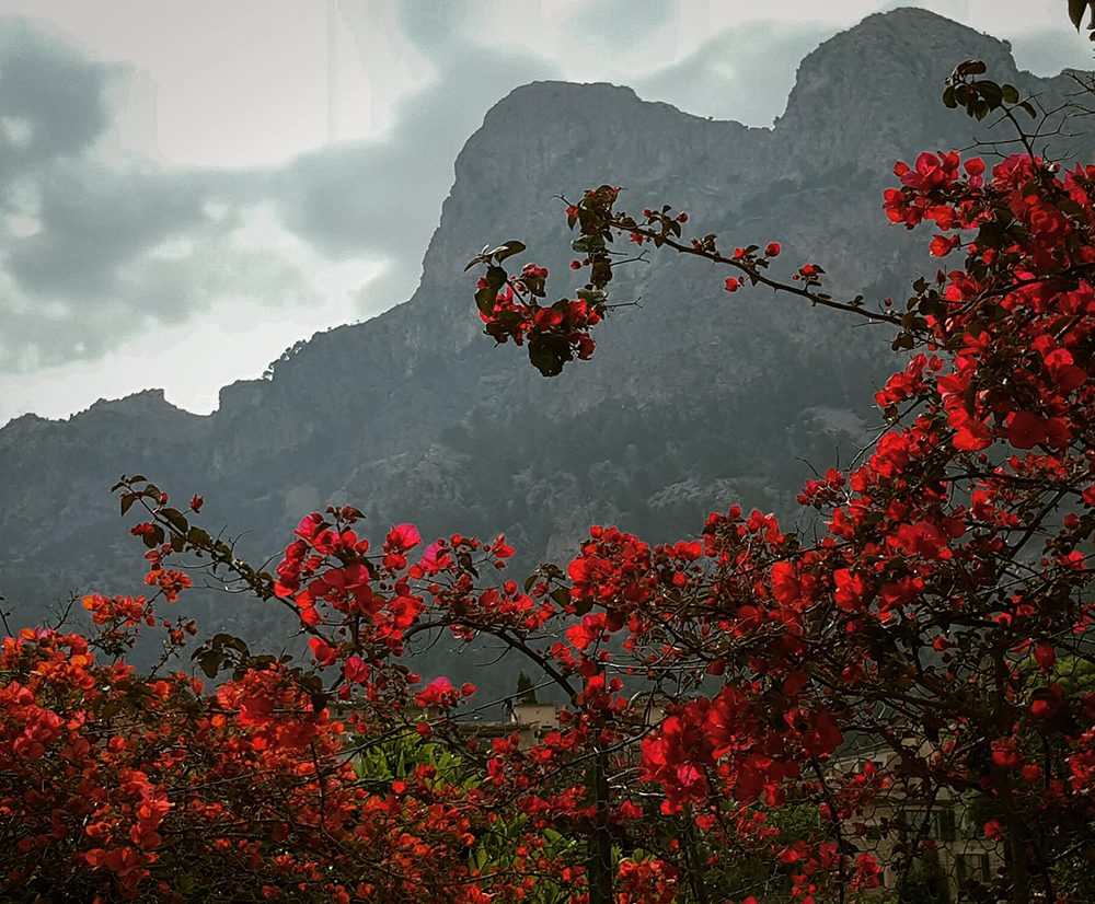 red flowers landscape photography