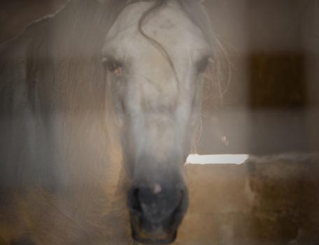 horse's head - Son Martorellet