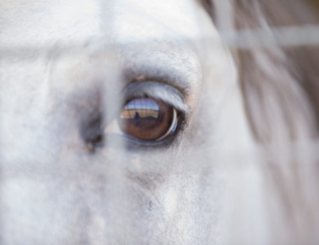 horse's eye - Son Martorellet
