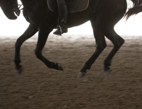 horse's legs - Son Martorellet