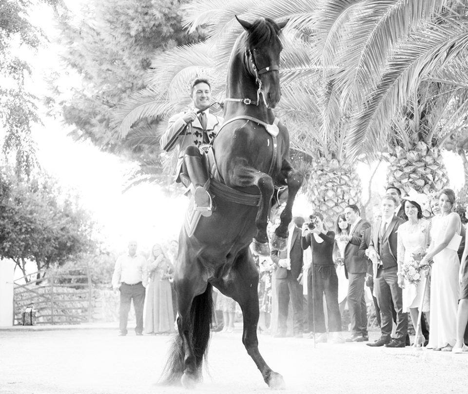 horse rearing at party