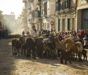goats in fiesta procession
