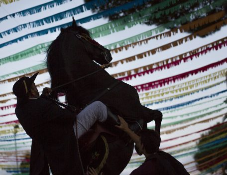 horse rears at fiesta - Llucmacanes Fiesta