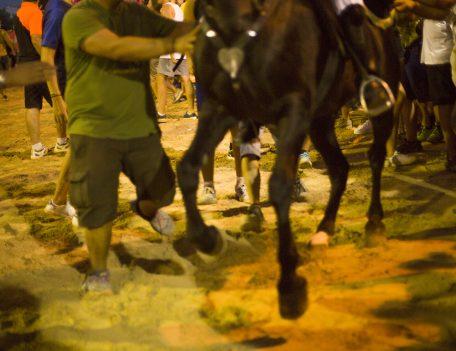 fiesta horse prancing - Llucmacanes Fiesta